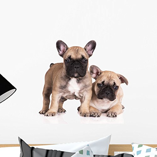 Wallmonkeys French Bulldog Puppies Wall Decal Peel and Stick Animal Graphics (18 in W x 12 in H) WM371878