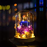 Warmiehomy Glass Cloche Bell Jar Dome with Wood Base + Lights (With warm white light, 12x20cm)