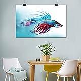 Lienzo para acuario, diseño de peces siameses que luchan contra Betta Natación en acuario Agresivo Sea Animal Artwork Pintura para oficina, 40,6 cm de ancho x 50,8 cm de largo, azul cielo coral oscuro