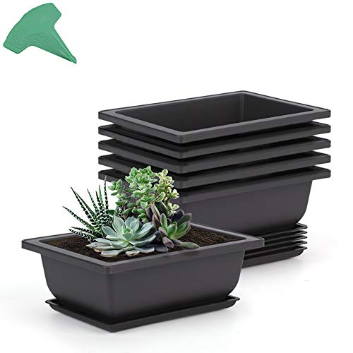 GROWNEER 6 Packs 6.5 Inches Bonsai Training Pots with 15 Pcs Plant Labels, Plastic Bonsai Plants Growing Pot for Garden, Yard, Office, Living Room, Balcony and More