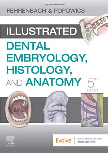 Compare Textbook Prices for Illustrated Dental Embryology, Histology, and Anatomy, 5e 5 Edition ISBN 9780323611077 by Fehrenbach RDH  MS, Margaret J.,Popowics, Tracy