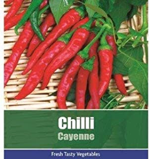 Ree Chili Cayennepfeffer Pfeffer Gemüse / Früchte Pflanze 95 Samen Hot