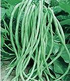 Semi di fagioli lunghi 15g Serpente/Yard-Long Asparagi Fagiolo rosso Tagliatella Fagiolo da giardino Giardino Verdura Biologica Verde Semi cinesi freschi