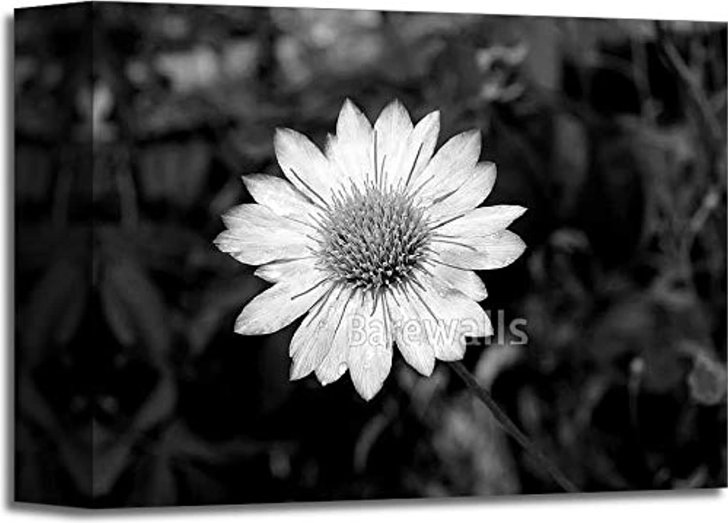 Black-and-White Flower. Gallery Wrapped Canvas Art (8in. x 10in.)
