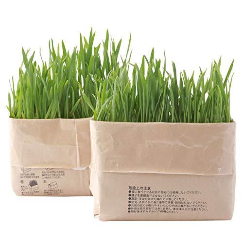 無印良品 猫草栽培セット 2セット(4個) 47879612