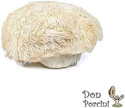 Lion's Mane Mushroom (Hericium erinaceus) Mycelium Dried Seeds Spawn Lion's Mane Mushroom Spores (1 oz) by Don Porcini