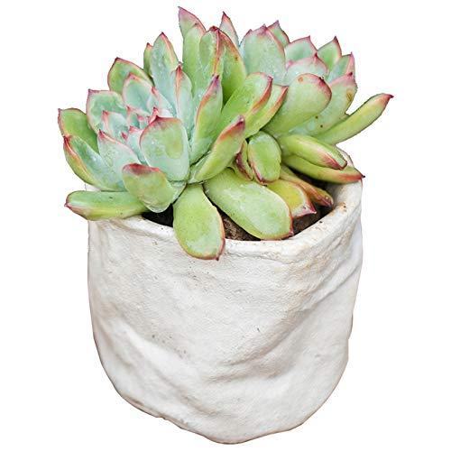 Macetero blanco para suculentas macetas, maceta de cerámica para interiores y exteriores, con drenaje para plantas y plantas para decoración del hogar (no incluye plantas), maceta (tamaño pequeño: