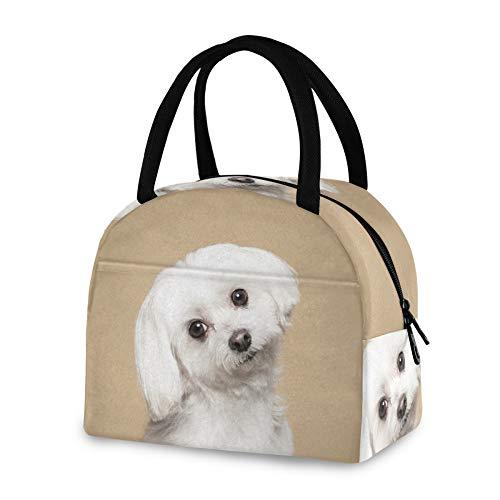 RELEESSS Isolierte Lunchtasche Süße Malteser Hund Tote Kühltasche Wiederverwendbare Kühltasche für Damen Herren Mädchen Jungen