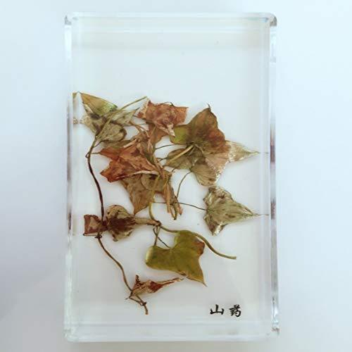 GEEZUE-voorbeelden van ignam-plant voor didatcteurs Biologisch onderzoek - barnsteen Creative