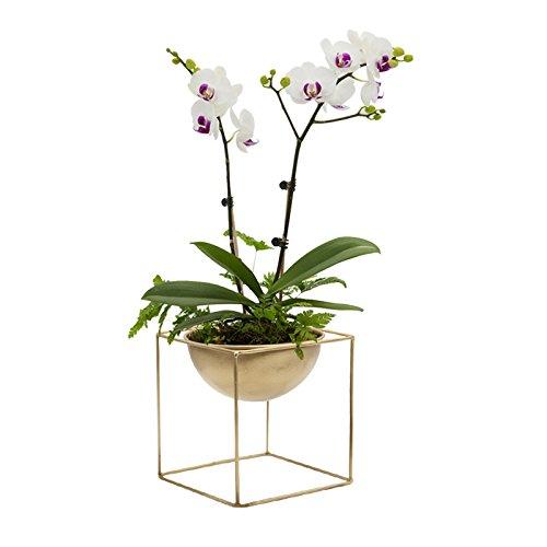 Purzest Modern Metal Cube Frame Planter Bowl, Decorative Planter with Attached Framework Stand, Golden