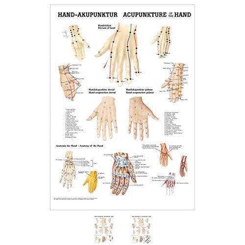 Sport-Tec Hand-Akupunktur Mini-Poster Anatomie 34x24 cm medizinische Lehrmittel
