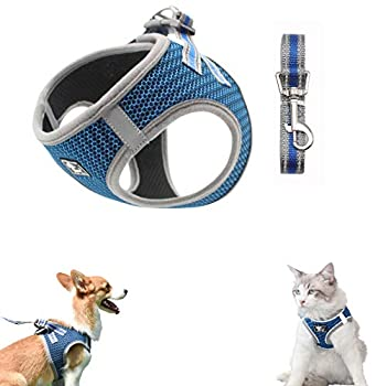 Best harness and leash Reviews