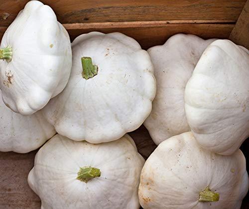 Bobby-Seeds Kürbissamen Custard White Portion