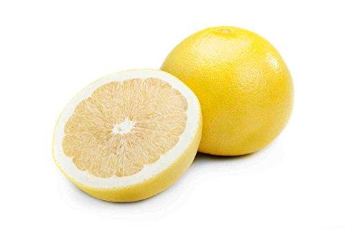 10 graines de Paramount Citrus TEXAS pamplemousse DOUCE (mélange d'orange et de raisin