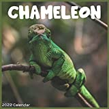 Chameleon 2022 Calendar: Official Chameleon Reptiles 2022 Calendar 16 Months