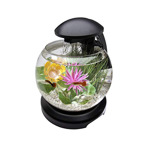 Best Flowing Water Fish Bowls