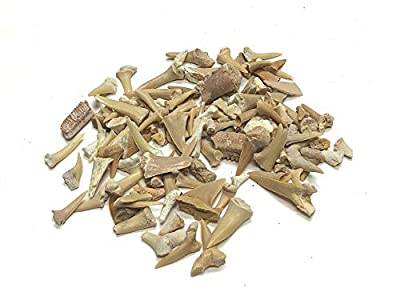 Zentron Crystal Collection Sand Shark Teeth Pack Fossils Real Natural