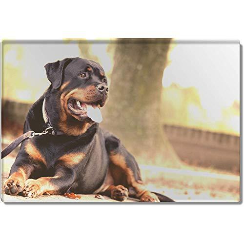 1 x 'Rottweiler' Set de Table Transparent (CR00002626)