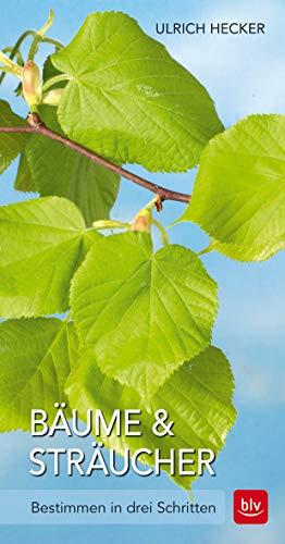 Bäume und Sträucher: Bestimmen in drei Schritten