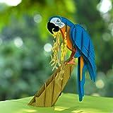 CUTPOPUP Parrot Pop Up Birthday Day Card for Daughter, Son, Nephew, Kids- Wonderful Bird Handmade Gift on Birthday, Christmas, Thanksgiving- Includes Elegant Envelope