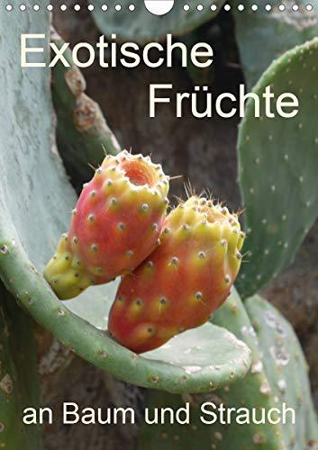 Exotische Früchte an Baum und Strauch (Wandkalender 2021 DIN A4 hoch)