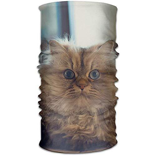 qinzuisp Stirnband Kopfbedeckung Fat Cat Multifunktionale Stirnbänder Outdoor Magic ScarfSport Headwrap Schweißband Nackenmanschette Schlauchmaske Gesicht Bandana Happy Halloween, Ostern, Weihnachten
