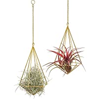 Mkouo 2 Pcs Hanging Air Plant Holder Tillandsia Container Himmeli Wall Decor(with Chains), Gold