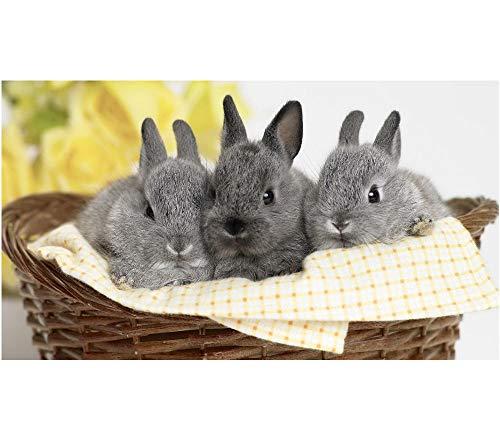 Drie schattig grijs konijnen in een bamboe mand 5D DIY diamant tekenen volledige diamant ronde boor borduurwerk kunst tekenen handgemaakte plakken ambachten 40 cm.