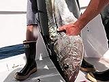 A Shocking Salute to the Tuna Gods- San Clemente Island