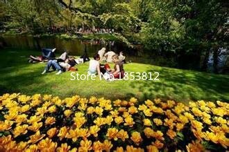 White : Sale!500Piece 16 Colors Tulip Seeds 2016 New Garden Flowers Four Season Sowing World Rare Flower Seeds For Garden
