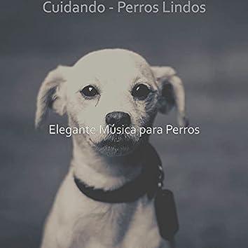 Cuidando - Perros Lindos