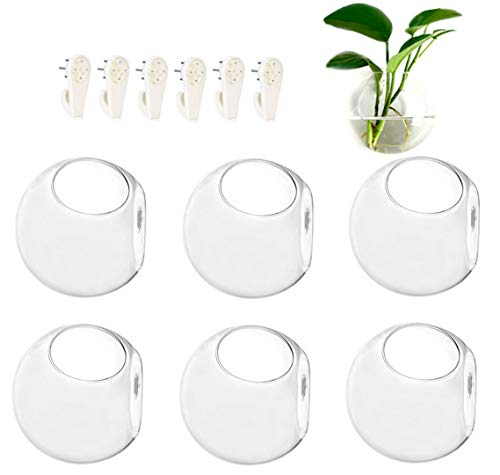 GEOLUX 6-Pack Wall Hanging Planters Glass Terrariums - Round Air Plants Wall Containers Succulents Globe Orbs (4.7 x 4.7 Inches)