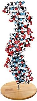 Molecular Models 14-DNA2700C 17 Base Pair DNA Model Kit Completely Assembled
