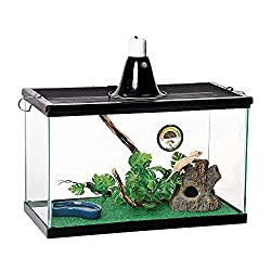 Gift Ideas for Frog Lovers include pet frogs!