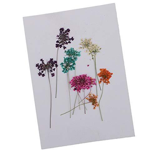 WQAZ Prägung 10x gepresste getrocknete Blume trockene Spitze für Harzschmuck-Handwerk DIY-Grußkarten Vasenfüllung