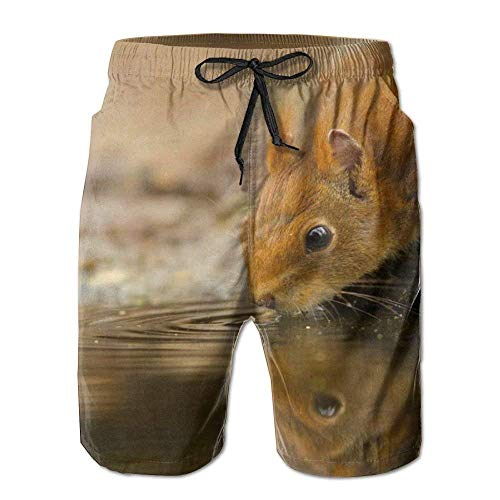 WITHY Beach Volleyball Shorts, Cute Wild Squirrel Beach Coverup Shorts for Men Boys, Outdoor Short Pants Beach Accessories,(XL)