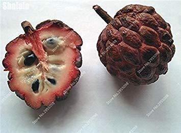 15pcs/sac Heirloom sucre Graines Succulent ANNONA Squamosa comestible tête Fruit Jardin Bouddha Custard Planta Easy Grow