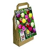 Bulbi di fiori olandesi di alta qualità. 45 bulbi per confezione. Meravigliosi tulipani dai colori assortiti. Dimensione dei bulbi: 11/12 cm di circonferenza.