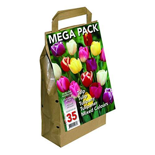 Greenbrokers Limited Blumenzwiebeln, Sorte Tulpen, verschiedene Farben, 45Stück