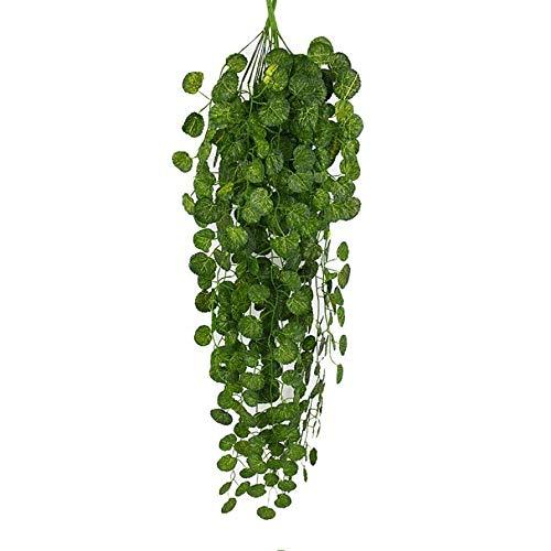 Bonsai Ficus Caen Hojas Tubonsai Org