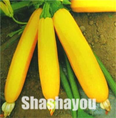 Generic Fresh 20pcs semillas de vegetales de calabacín para plantar amarillo