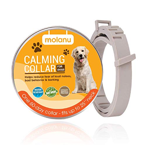 Best Calming Collar for Dogs