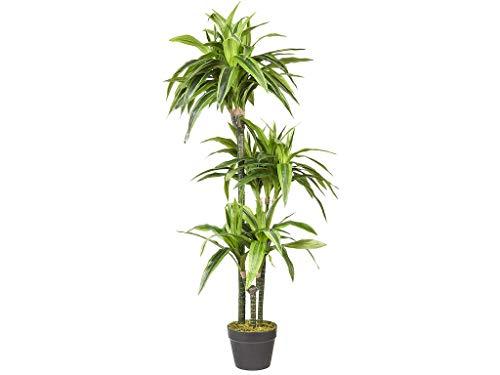 HTT Decorations - Künstlicher Drachenbaum (Lemon Lime) - Hochwertige Kunstpflanzen - 3 Stämme - 120 x 50 cm, Untertopf mit 16 cm Durchmesser