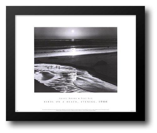 Birds on a Beach 24x20 Framed Art Print by Adams, Ansel