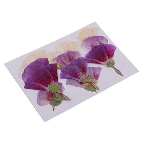 Sharplace 12 Piezas de Flores Secas Prensadas Godetia DIY Floral Art Craft Decor Adorno - Mezclado