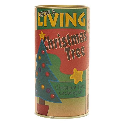 The Jonsteen Company Living Christmas Tree | Seed Grow Kit