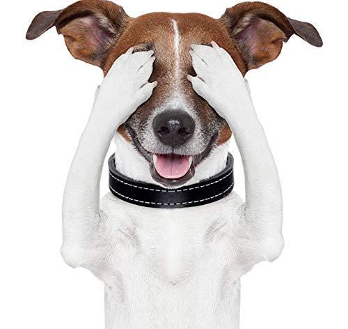 Wandtattoos Wandbildercartoon Süße Augenbinde Glücklicher Hund Toilette Bad Tier Augen Aufkleber Zimmer Wandtattoo Dekoration 175 X 203 Cm