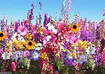 Petsdelite® Mélange de fleurs de 1 oz environ 12 500 graines (couvre 125 pieds carrés) pour zone ombragée