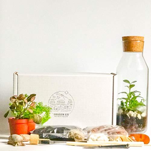 Kit terrario con contenitore in vetro e coperchio in sughero, mini giardino, idea regalo, kit fai da te