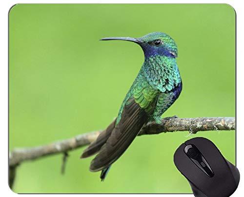 Kundengebundenes Rechteck-nicht Beleg-GummiMousepad, Kolibri-Vogel, der tropische Mausunterlage sitzt